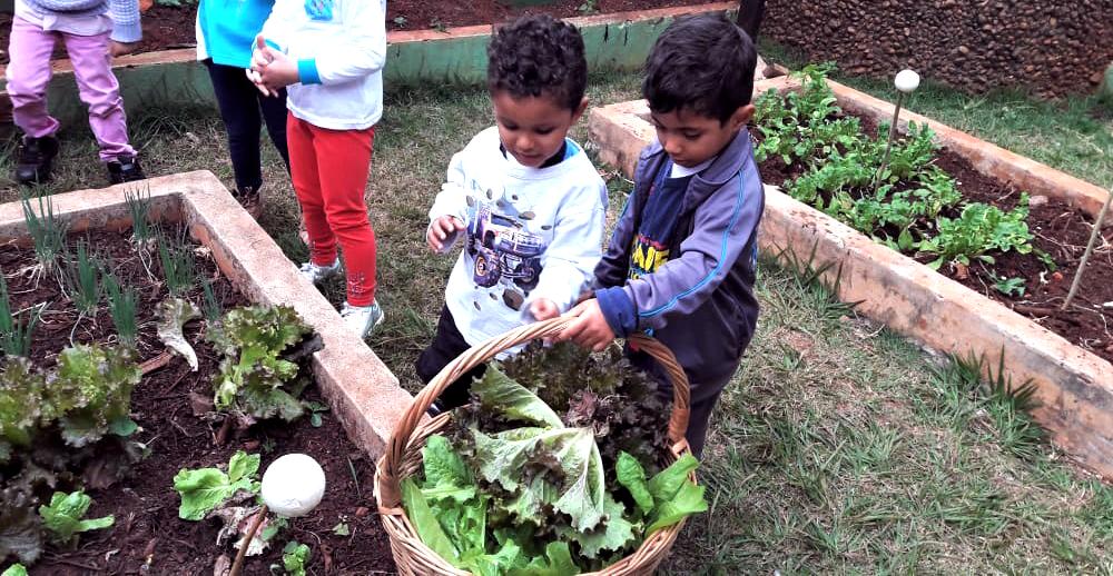 Crianças na horta escolar